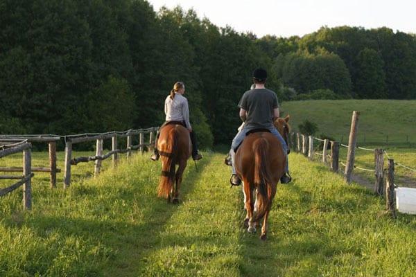 Pferdegestütztes Coaching auf Gut Sarnow